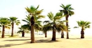 Al Oqeila Beach Kuwait