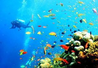 Sipadan Island Malaysia- Divers Destination