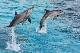 Wonderful Dolphins
