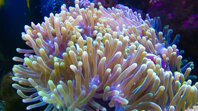 List of Amazing Sea Plants - World's Exotic Beaches