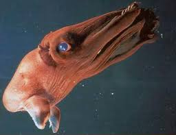 Strange Deep Sea Creatures