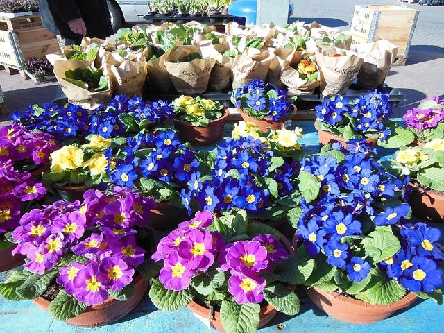 flower markets in Netherlands