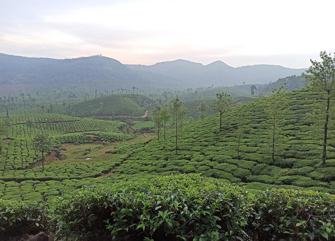 vagamon hills India