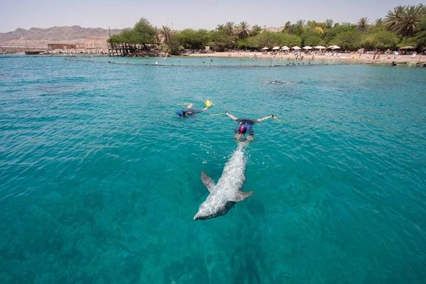 Dolphin Reef Beach