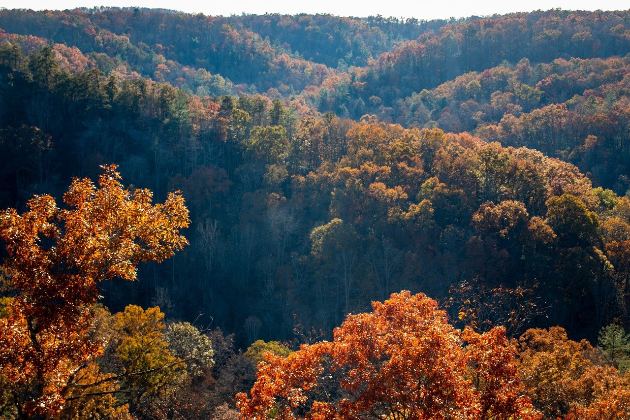 Top Attractions in Gatlinburg and Pigeon Forge for First Time Visitors