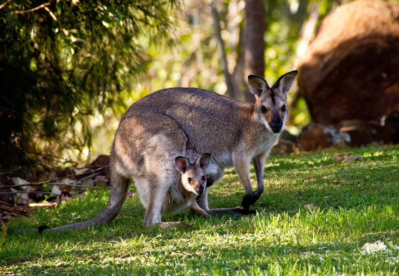 6 Important Tips for First-Time Travelers to Australia